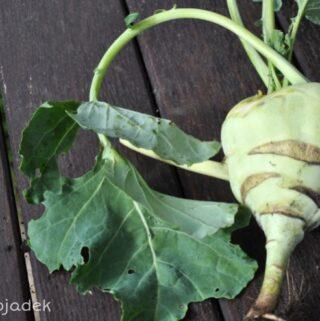 zdrowa zielenina - liście kalarepy