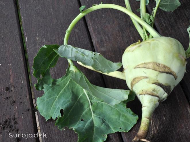 Super zdrowa zielenina czyli o przewadze liścia nad korzeniem