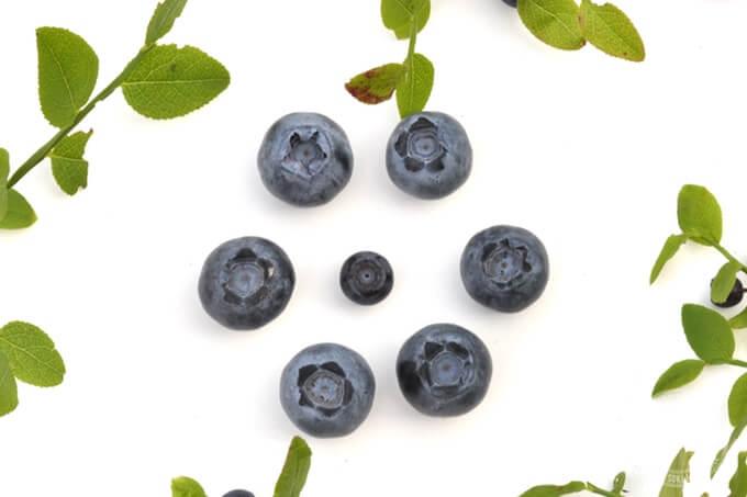 czarne jagody, borówki amerykańskie i jagoda kamczacka posiadają potężne działanie przeciwutleniające i skutecznie neutralizują wolne rodniki