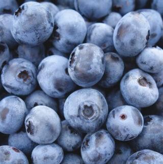 właściwości zdrowotne jagód: czarnej borówki i borówki amerykańskiej