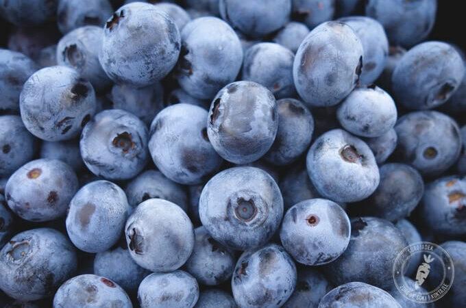 Czarne jagody wymiatają wolne rodniki i… tłuszcz