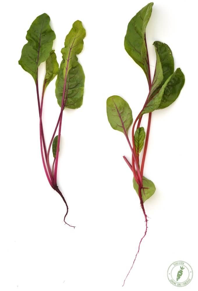 liście buraka korzeniowego i buraka liściastego