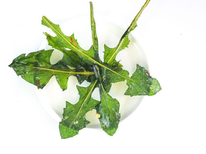 Są pikantne, chrupiące i pachną czosnkiem. Same liście bez przypraw w postaci pieczonej są bardzo delikatne w smaku.