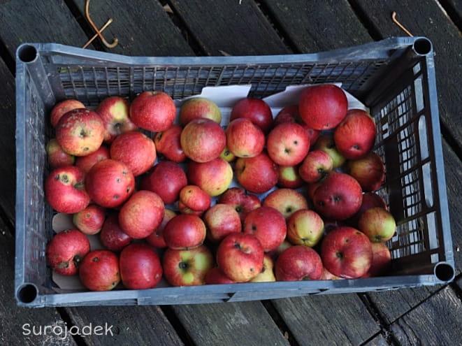 warzywa i owoce od lokalnych rolników na targu w Konstancinie