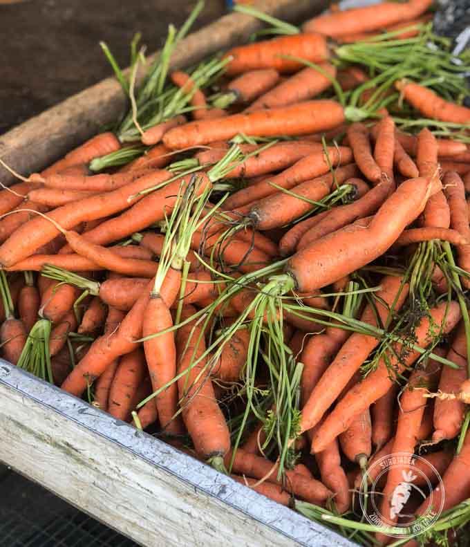 Lokalny bazarek czy warzywniak będzie Twoim ulubionym miejscem na poszukiwanie składników do świeżo wyciskanych soków