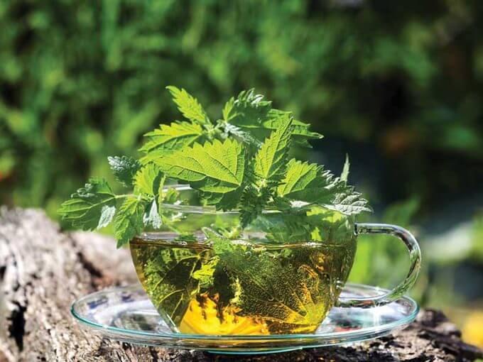 herbata z pokrzywy ma działanie moczopędne i oczyszczające układ moczowy