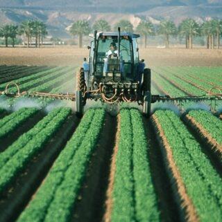 jak oczyścić organizm z toksyn i pestycydów? Wybierając organiczne produkty