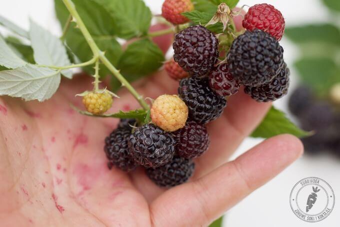 jeżyny maliny i truskawki to owoce jagodowe pełne antyoksydantów