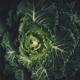 kapusta jak wszystkie warzywa krzyżowe słynie z właściwości antynowotworowych i przeciwzapalnych. To bogate źródło witaminy C i siarki