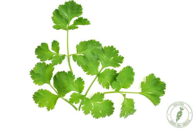 kolendra właściwości liści i nasion kolendry