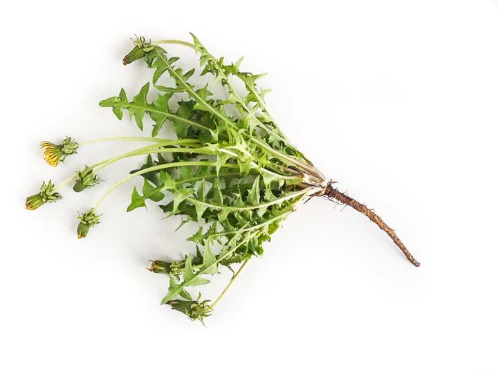 liście mniszka lekarskiego to źródło wielu witamin i minerałów, naturalne wsparcie dla wątroby i nerek