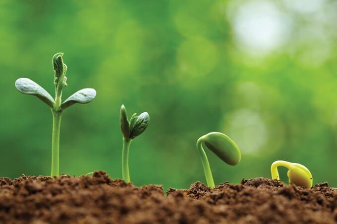 organiczne produkty oczyszczą organizm z nadmiaru pestycydów