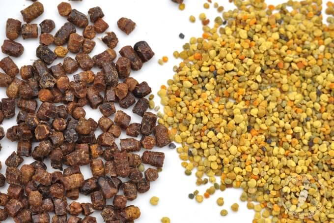 pyłek pszczeli czy pierzga co jest zdrowsze co wybrać jakie są różnice