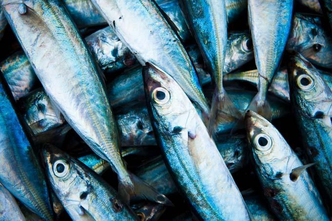 Na zawartość witaminy D w rybach ma jednak wpływ ich pochodzenie. Ryby hodowlane jak łosoś mogą zawierać nawet 4-krotnie mniej witaminy D w porównaniu z dzikimi rybami.