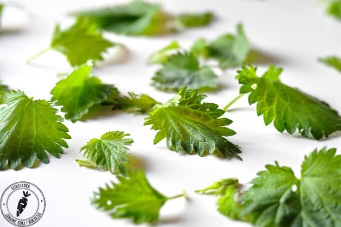 młoda pokrzywa zielony składnik do koktajli i soków