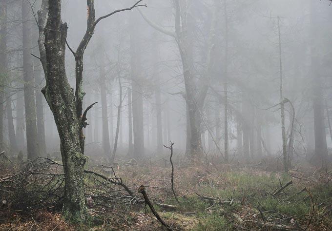 W sezonie zimowym zalecana jest w Polsce suplementacja witaminy D