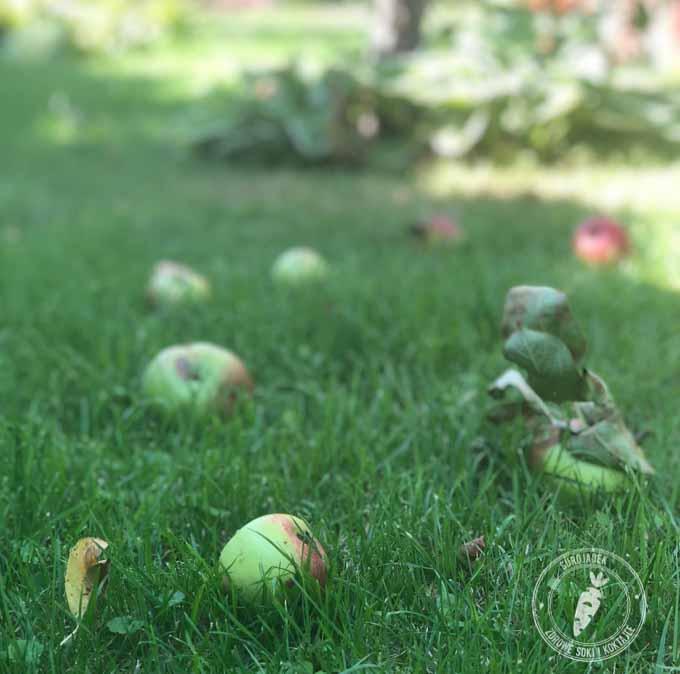 jabłka spady co z nimi zrobić?