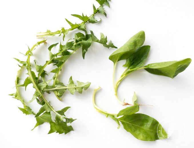 czy dziko rosnące chwasty są zdrowsze od sklepowego szpinaku czy jarmużu?