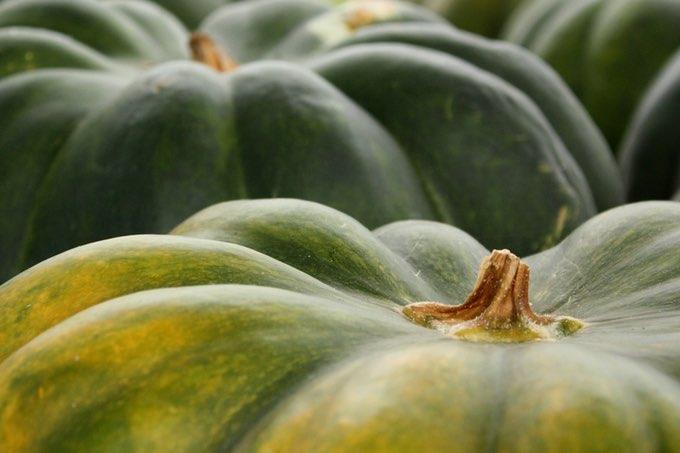 Właściwości dyni – 6 powodów by jeść dynię